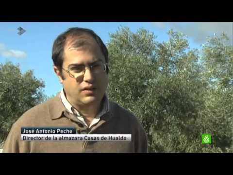 Casas de Hualdo, mejor aceite del mundo en la categoría calidad /precio